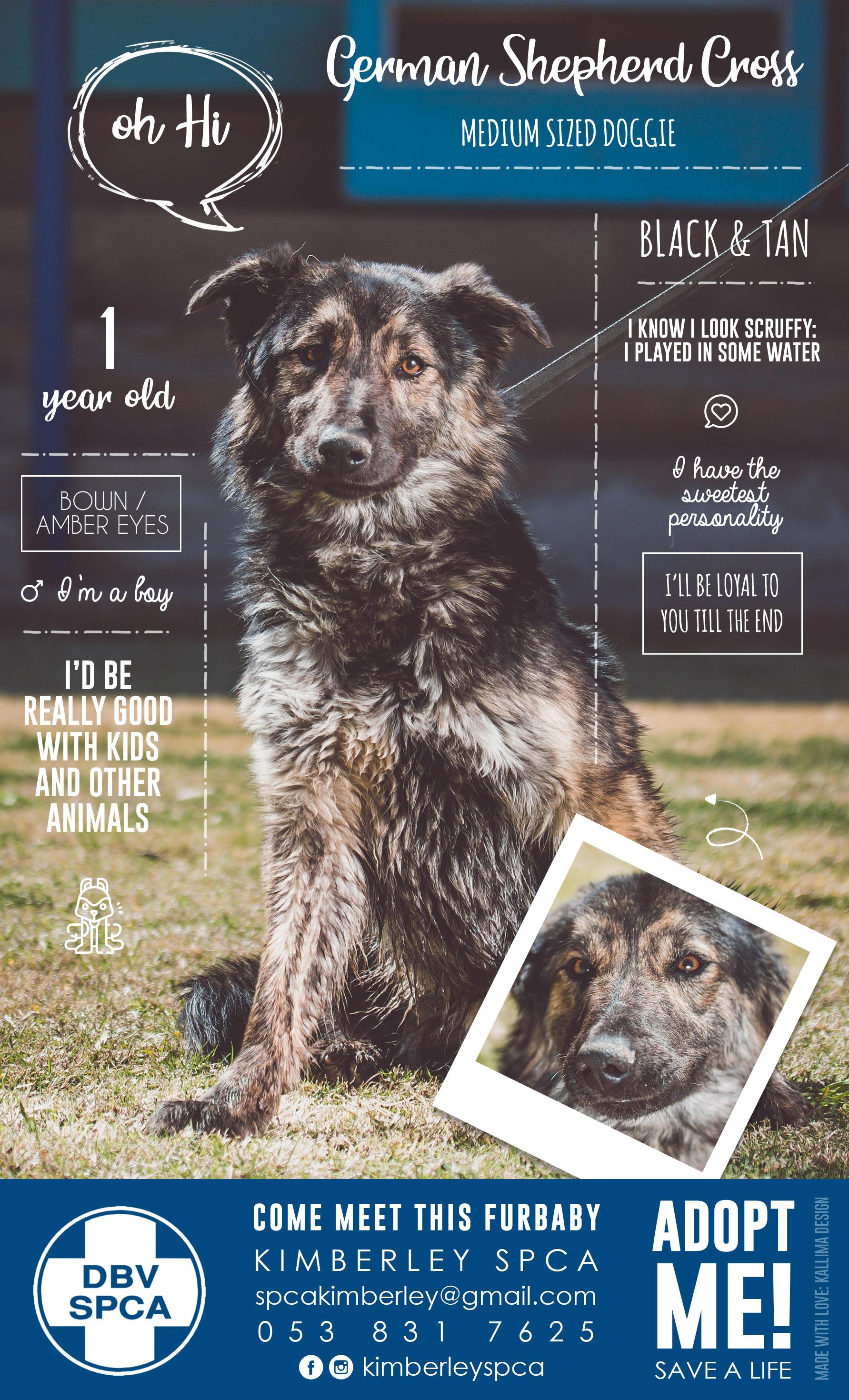 Home - SPCA: Kimberley